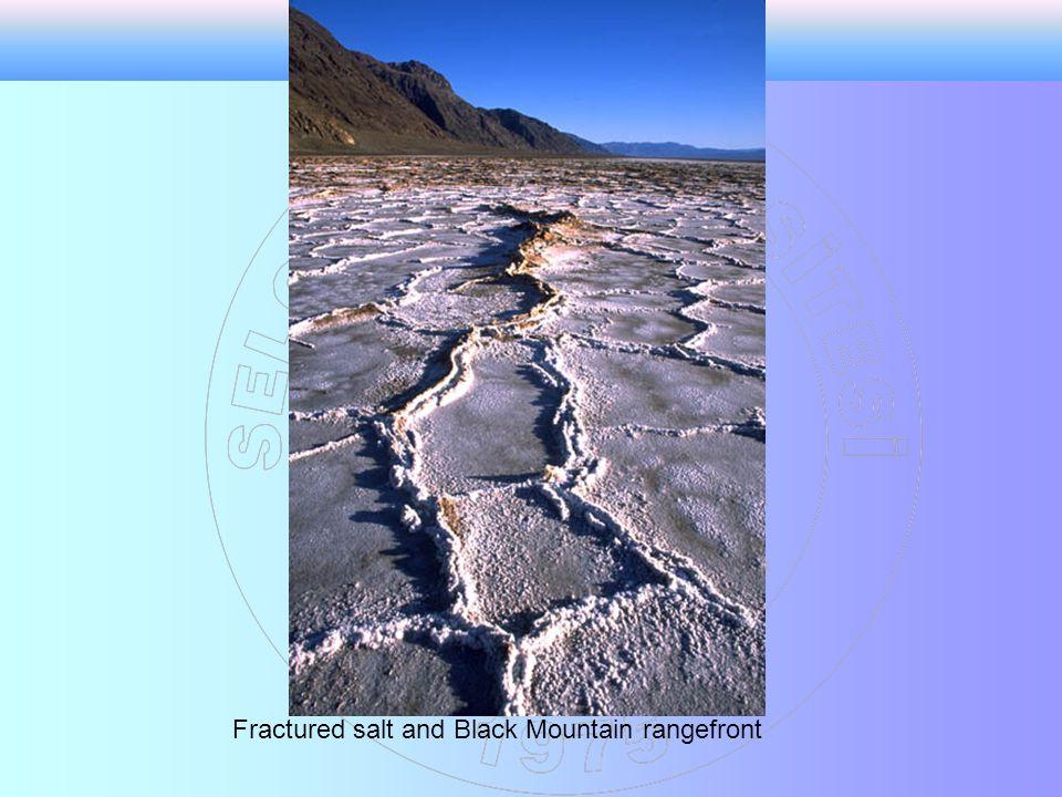 Polygonal fractures in salt