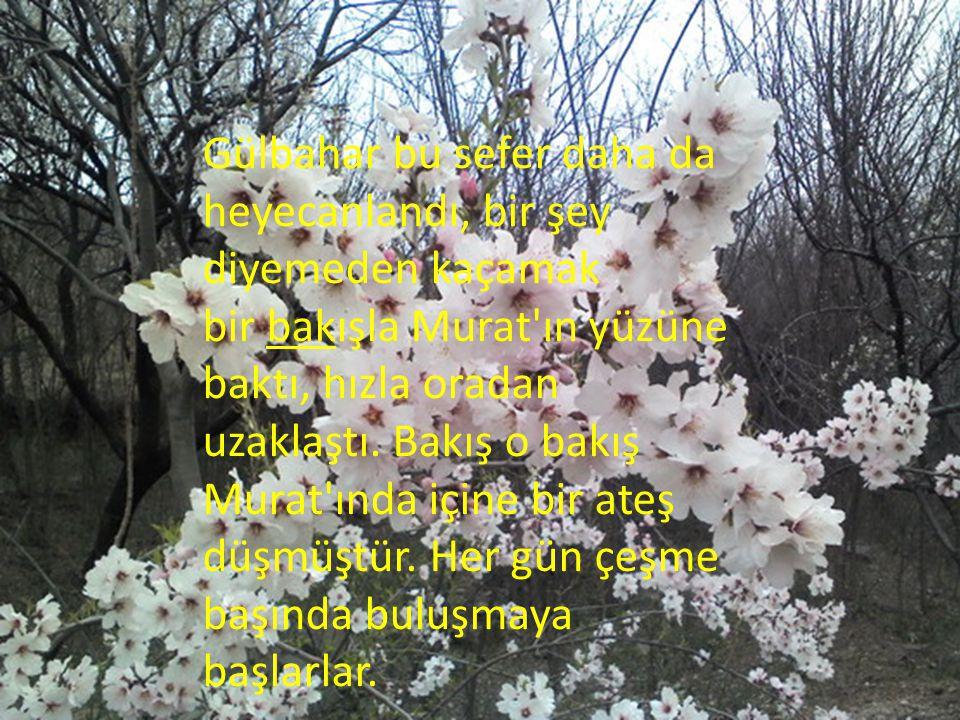 Gülbahar bu sefer daha da heyecanlandı, bir şey diyemeden kaçamak bir bakışla Murat'ın yüzüne baktı, hızla oradan uzaklaştı. Bakış o bakış Murat'ında