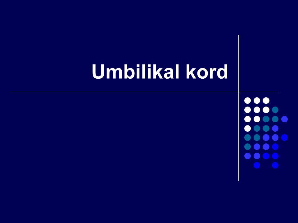 Umbilikal kord