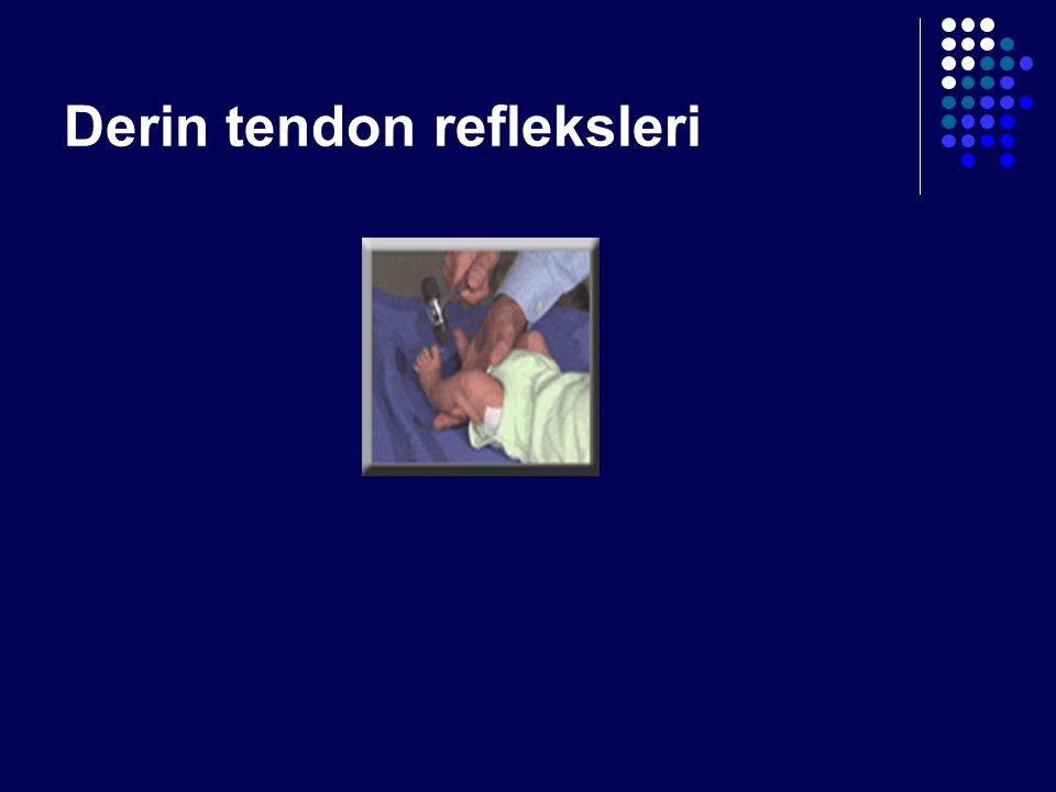 Derin tendon refleksleri