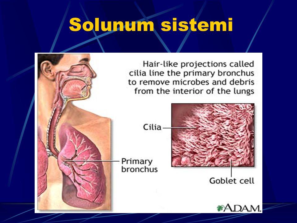 Solunum sistemine zararları Sigara; Bronşit Amfizem Sık enfeksiyon Astım Akciğer kanseri, yapar