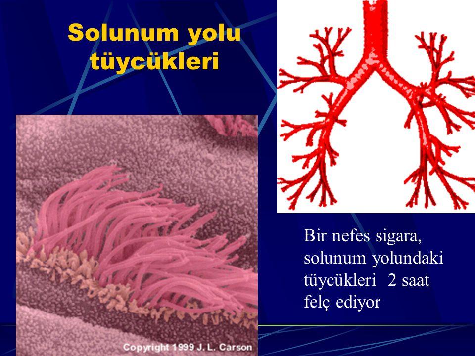 Beyne zararı Felç, ileri yaşta bunama (Alzheimer) görülür.