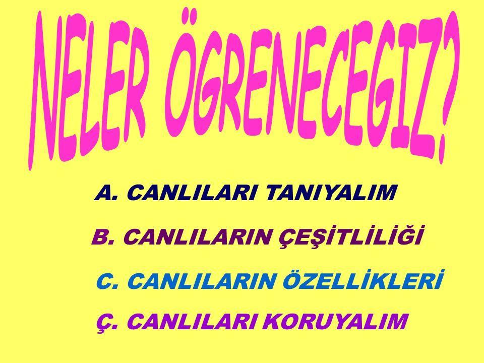 A. CANLILARI TANIYALIM B. CANLILARIN ÇEŞİTLİLİĞİ C. CANLILARIN ÖZELLİKLERİ Ç. CANLILARI KORUYALIM