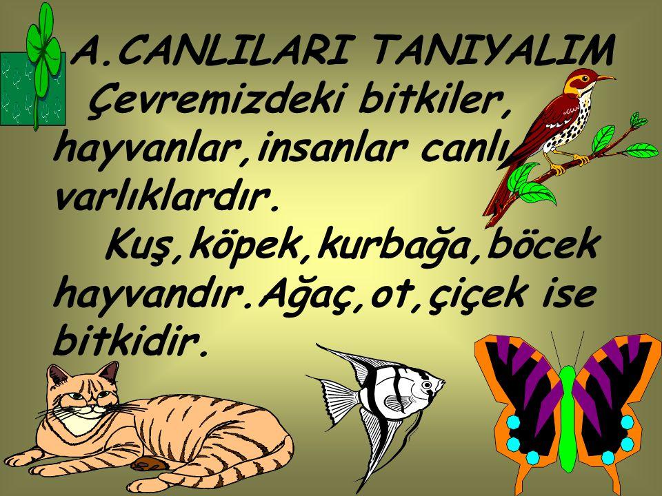 A.CANLILARI TANIYALIM Çevremizdeki bitkiler, hayvanlar,insanlar canlı varlıklardır. Kuş,köpek,kurbağa,böcek hayvandır.Ağaç,ot,çiçek ise bitkidir.