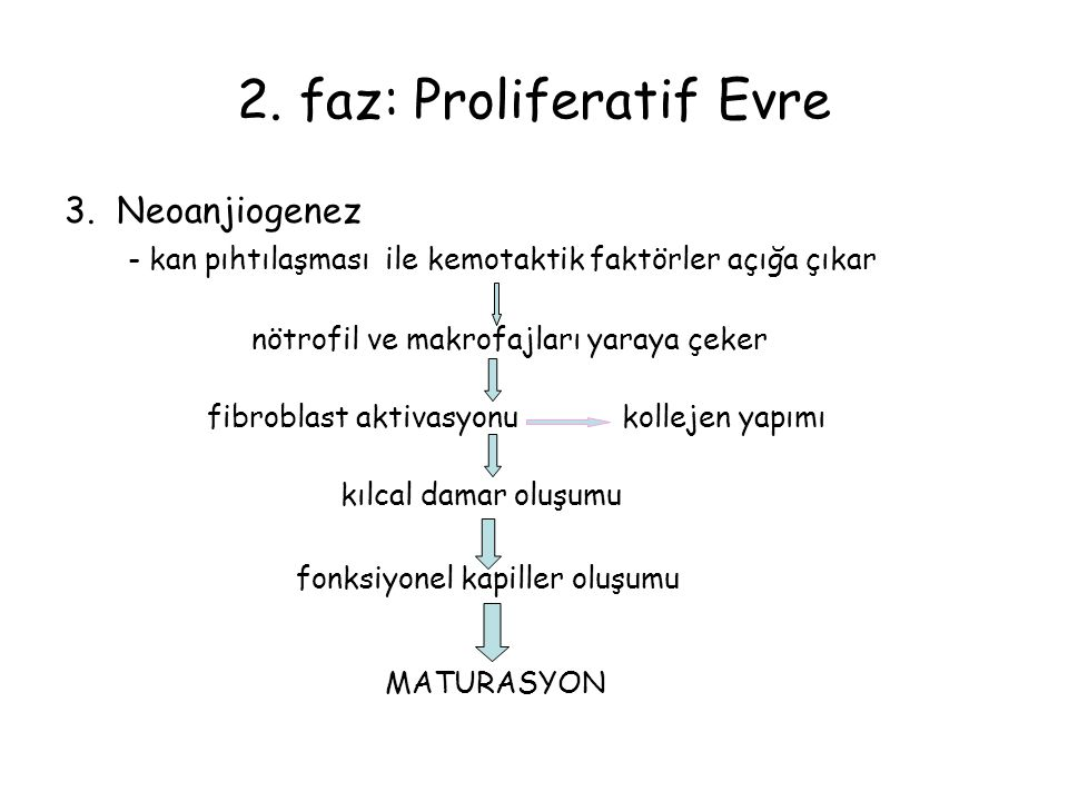 2. faz: Proliferatif Evre 3. Neoanjiogenez - kan pıhtılaşması ile kemotaktik faktörler açığa çıkar nötrofil ve makrofajları yaraya çeker fibroblast ak