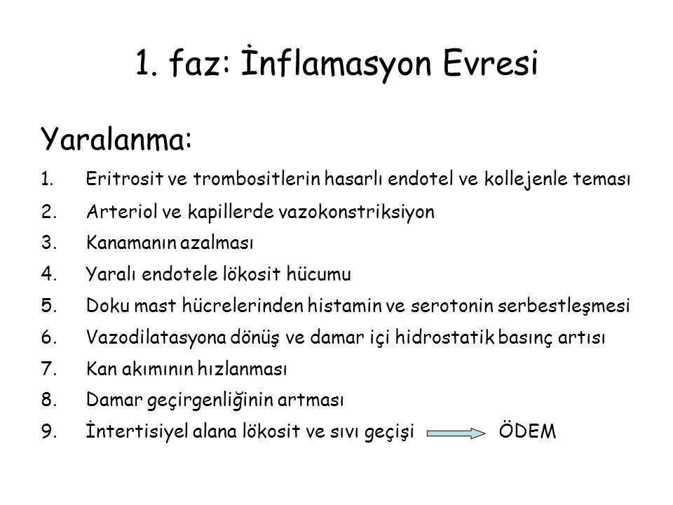 1. faz: İnflamasyon Evresi Yaralanma: 1.Eritrosit ve trombositlerin hasarlı endotel ve kollejenle teması 2.Arteriol ve kapillerde vazokonstriksiyon 3.