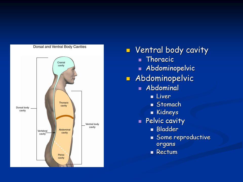 Penetran Yaralanmalarda Tedavi Yaklaşımı Karnın ateşli silahla yaralanmalarında ; Eğer kurşunun peritonu geçtiğinden emin olunursa kesin laparotomi endikasyonu vardır.