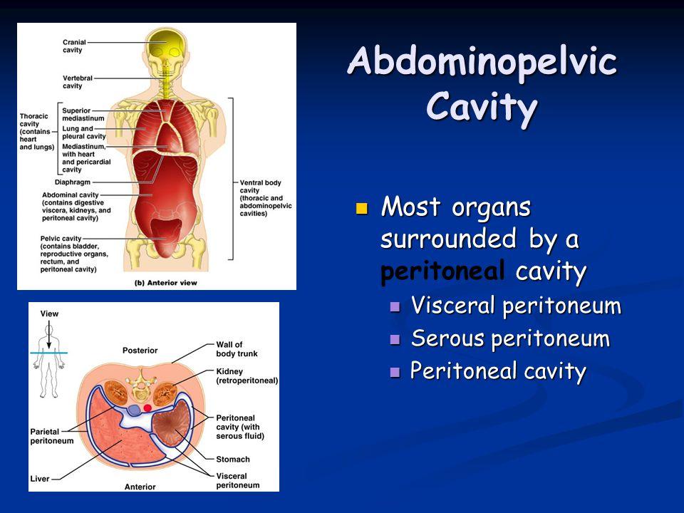 Özel Teşhis Yöntemleri Diagnostik Peritoneal Lavaj(DPL); Künt karın travmalarında kullanımı daha yaygındır.