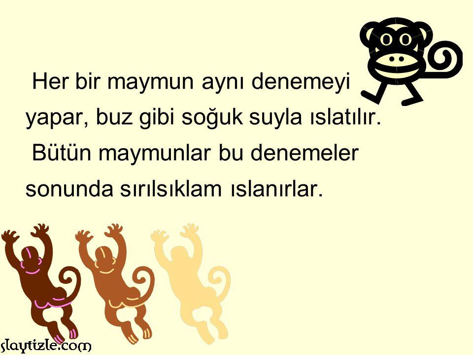 Artık Türkiye de olduğu gibi kötü yönetilmeyi ve maymun davranışını kanıksarsanız, sonuçta hayatınızdan memnun olmaya başlar, kurulu düzenin savunucusu olup karşı çıkana da en çok ve en iştahlı siz engel olursunuz.