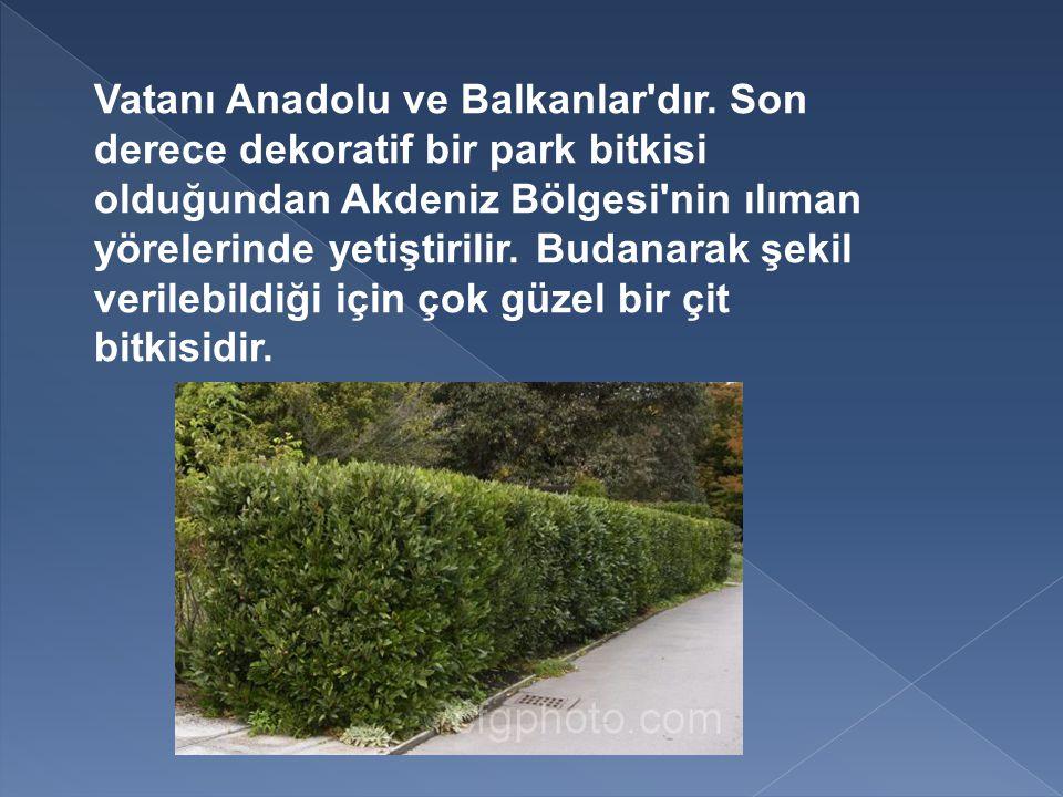 Vatanı Anadolu ve Balkanlar dır.
