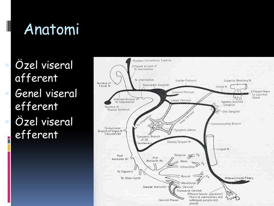 Etyoloji  Konjenital  Möbius sendromu  Alt dudak paralizisi  İdiyopatik  Bell' s palsy  Melkersson-Rosenthal sendromu  Travma  İntratemporal  Ekstratemporal (Kesici, künt)