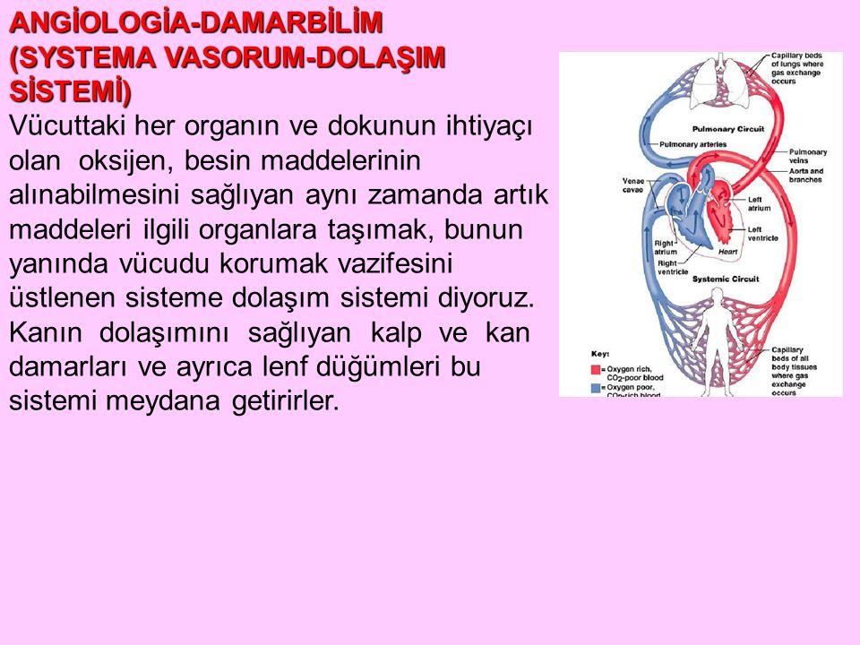 ANGİOLOGİA-DAMARBİLİM (SYSTEMA VASORUM-DOLAŞIM SİSTEMİ) Vücuttaki her organın ve dokunun ihtiyaçı olan oksijen, besin maddelerinin alınabilmesini sağl