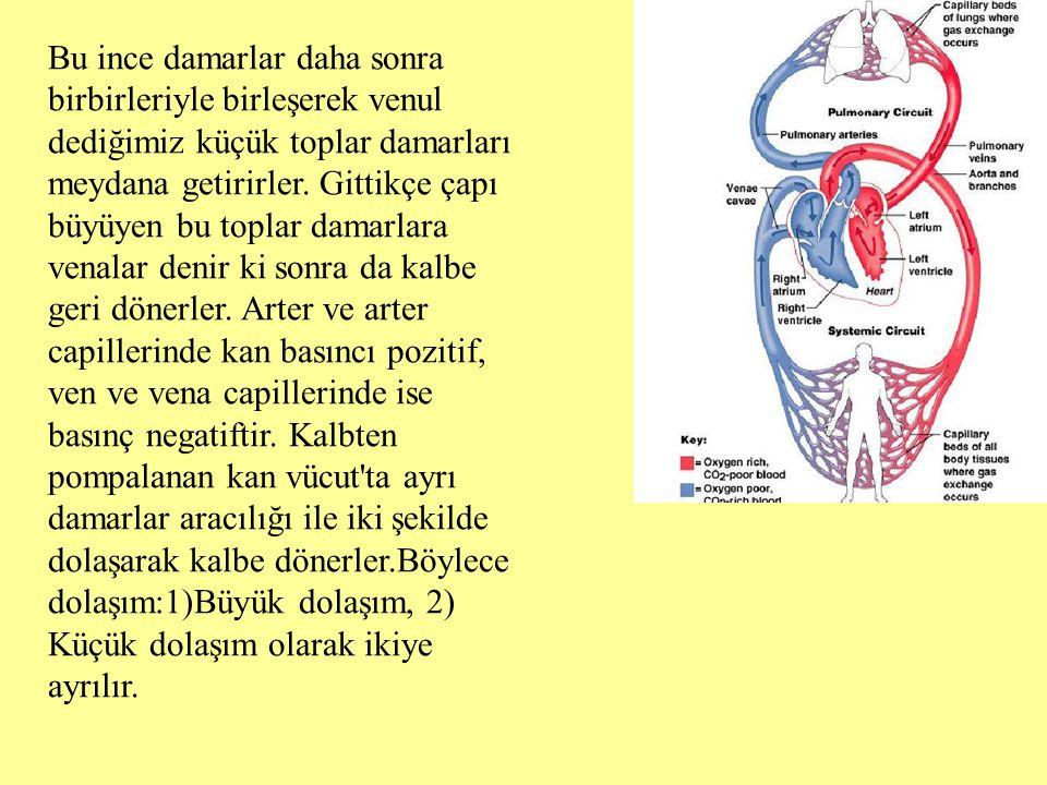 Bu ince damarlar daha sonra birbirleriyle birleşerek venul dediğimiz küçük toplar damarları meydana getirirler. Gittikçe çapı büyüyen bu toplar damarl