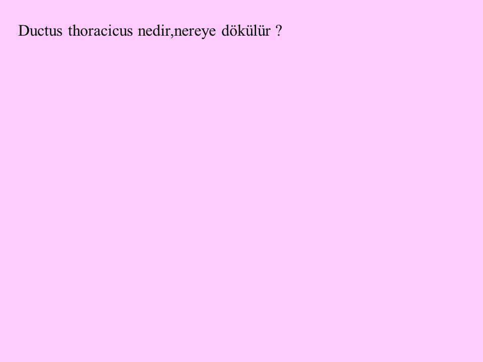 Ductus thoracicus nedir,nereye dökülür ?