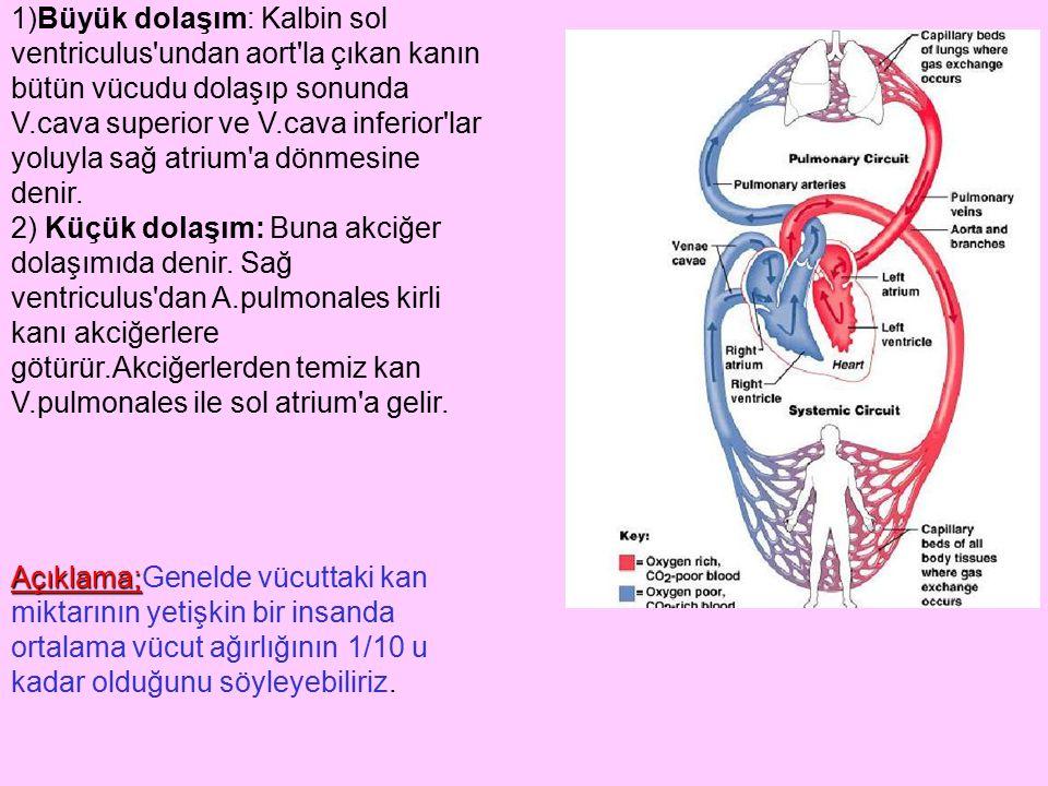 1)Büyük dolaşım: Kalbin sol ventriculus'undan aort'la çıkan kanın bütün vücudu dolaşıp sonunda V.cava superior ve V.cava inferior'lar yoluyla sağ atri