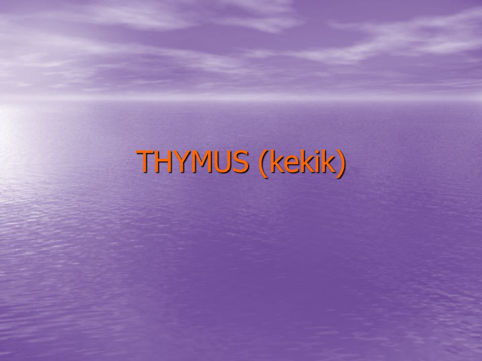 THYMUS (kekik)