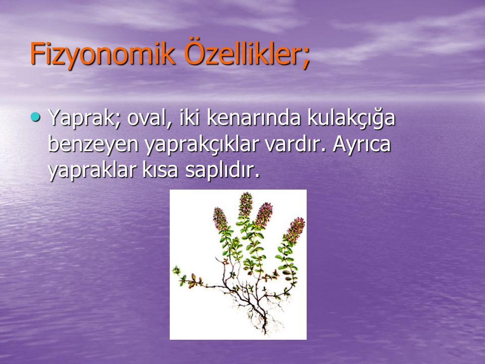 Fizyonomik Özellikler; Yaprak; oval, iki kenarında kulakçığa benzeyen yaprakçıklar vardır. Ayrıca yapraklar kısa saplıdır. Yaprak; oval, iki kenarında