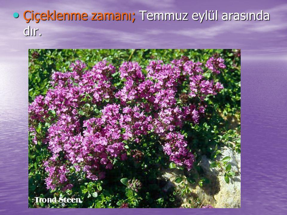 Çiçeklenme zamanı; Temmuz eylül arasında dır. Çiçeklenme zamanı; Temmuz eylül arasında dır.