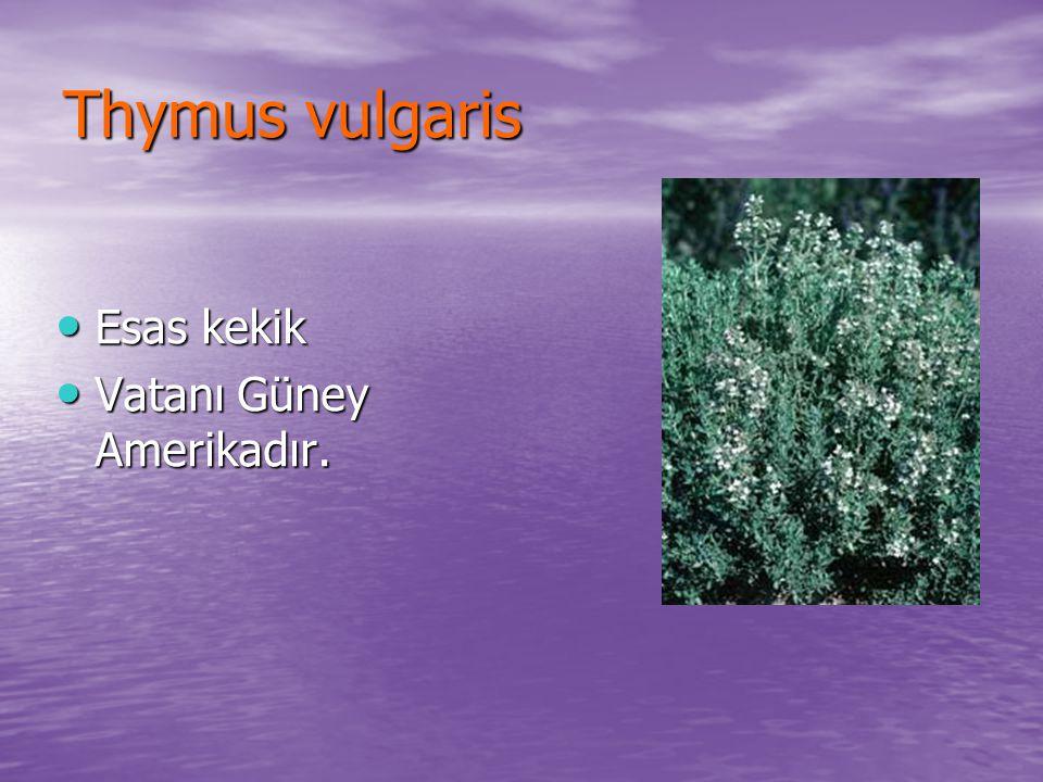 Thymus vulgaris Esas kekik Esas kekik Vatanı Güney Amerikadır. Vatanı Güney Amerikadır.