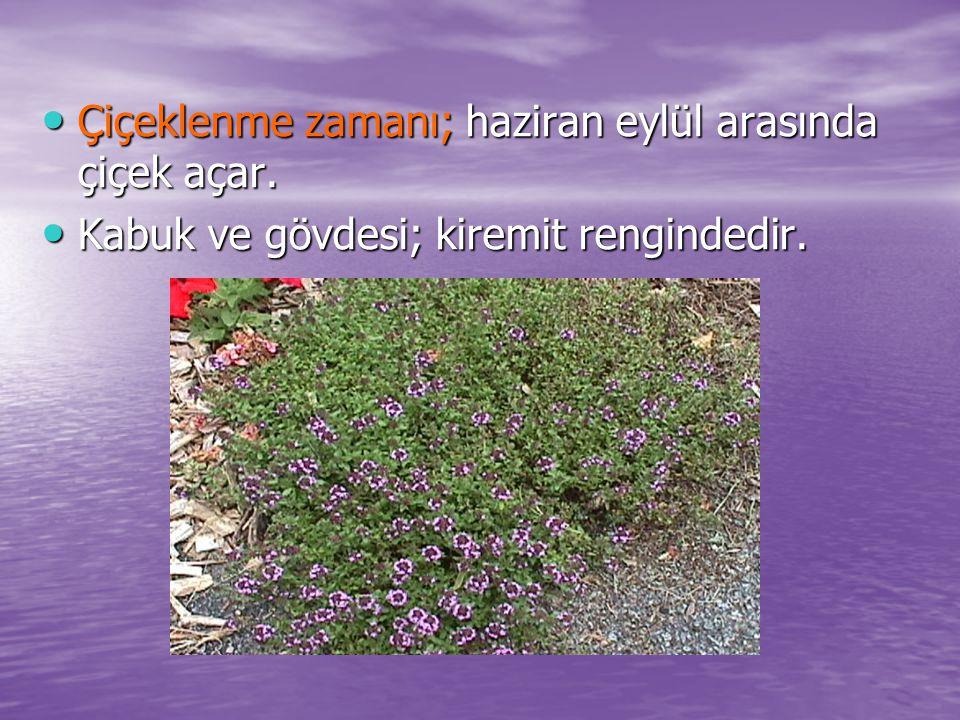 Çiçeklenme zamanı; haziran eylül arasında çiçek açar. Çiçeklenme zamanı; haziran eylül arasında çiçek açar. Kabuk ve gövdesi; kiremit rengindedir. Kab