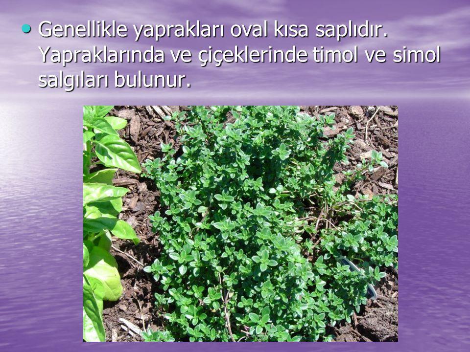 Genellikle yaprakları oval kısa saplıdır. Yapraklarında ve çiçeklerinde timol ve simol salgıları bulunur. Genellikle yaprakları oval kısa saplıdır. Ya