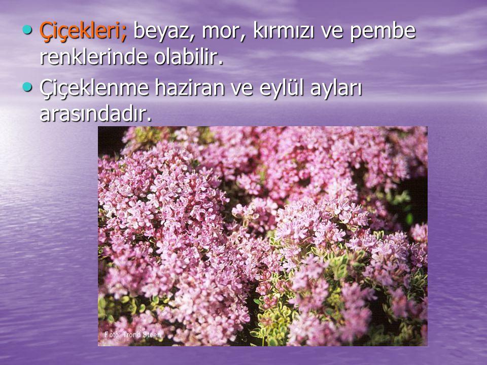 Çiçekleri; beyaz, mor, kırmızı ve pembe renklerinde olabilir. Çiçekleri; beyaz, mor, kırmızı ve pembe renklerinde olabilir. Çiçeklenme haziran ve eylü