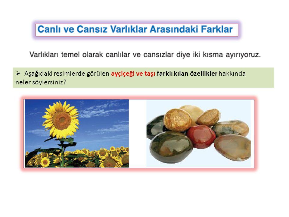  Aşağıdaki resimlerde görülen ayçiçeği ve taşı farklı kılan özellikler hakkında neler söylersiniz?