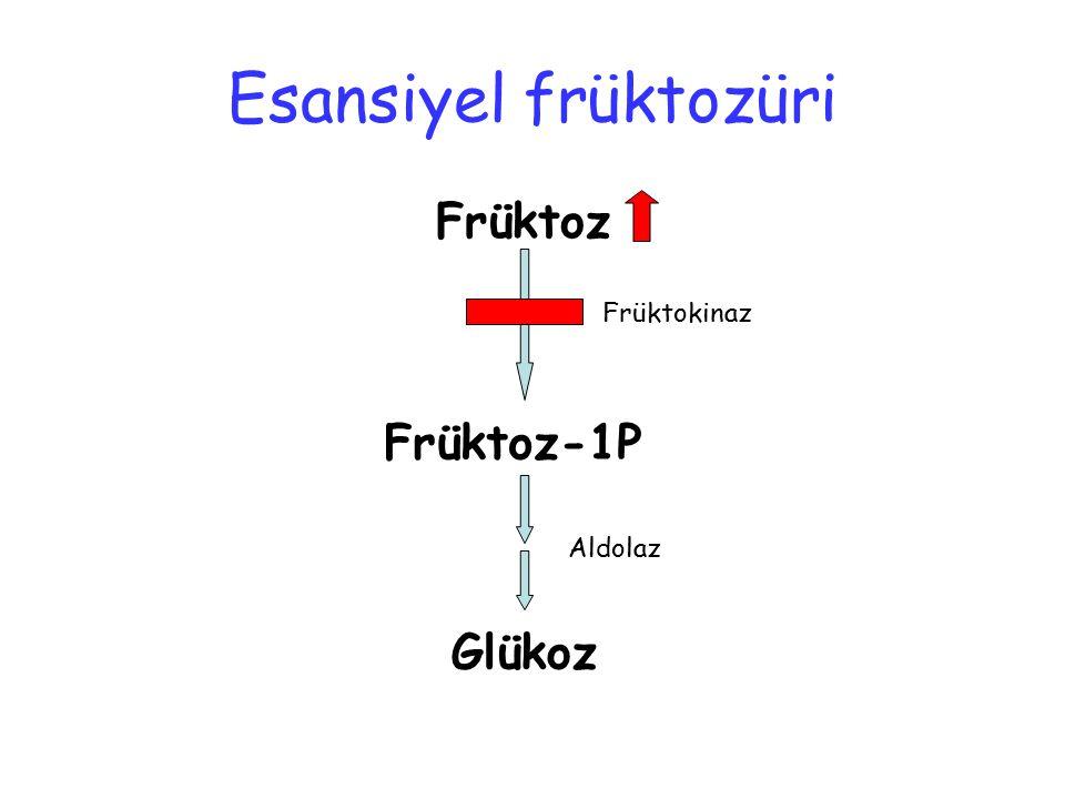 Früktoz Früktoz-1P Glükoz Früktokinaz Aldolaz Esansiyel früktozüri
