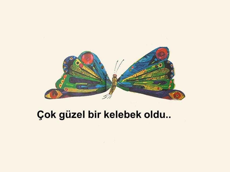 Çok güzel bir kelebek oldu..