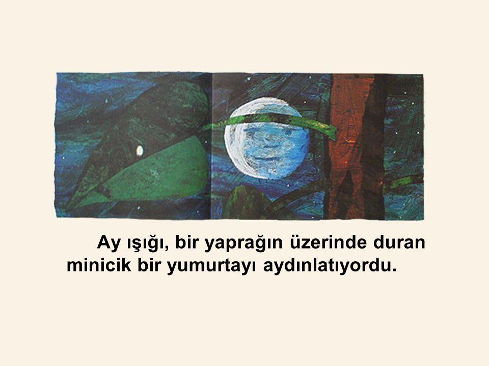 Ay ışığı, bir yaprağın üzerinde duran minicik bir yumurtayı aydınlatıyordu.