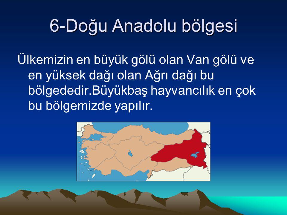 6-Doğu Anadolu bölgesi Ülkemizin en büyük gölü olan Van gölü ve en yüksek dağı olan Ağrı dağı bu bölgededir.Büyükbaş hayvancılık en çok bu bölgemizde yapılır.