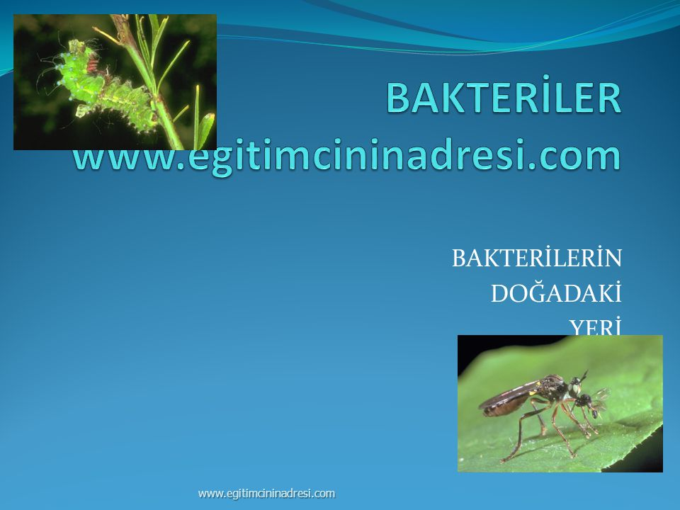 BAKTERİLERİN DOĞADAKİ YERİ www.egitimcininadresi.com