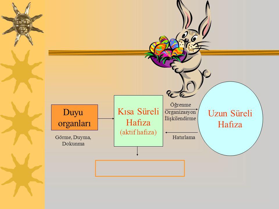Duyu organları Kısa Süreli Hafıza (aktif hafıza) Uzun Süreli Hafıza Görme, Duyma, Dokunma Hatırlama Öğrenme Organizasyon İlişkilendirme