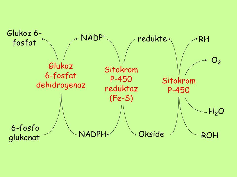 redükte H2OH2O ROH RH Glukoz 6- fosfat 6-fosfo glukonat NADP + NADPH Okside Glukoz 6-fosfat dehidrogenaz Sitokrom P-450 redüktaz (Fe-S) Sitokrom P-450