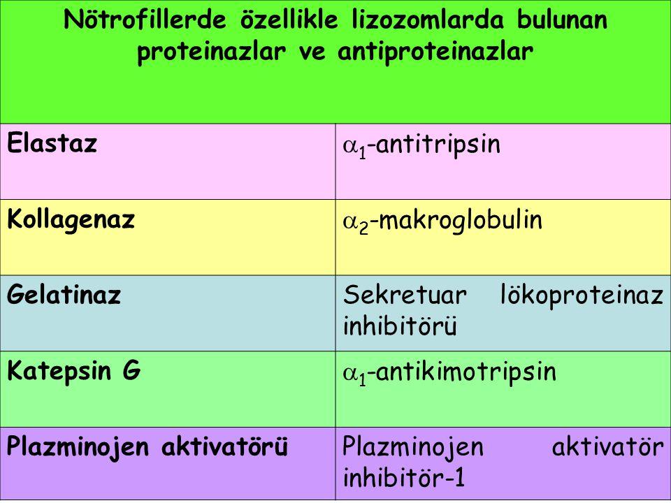 Nötrofillerde özellikle lizozomlarda bulunan proteinazlar ve antiproteinazlar Elastaz  1 -antitripsin Kollagenaz  2 -makroglobulin GelatinazSekretua