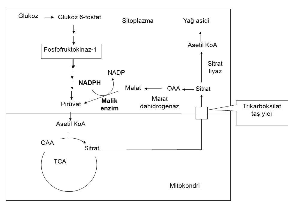 Sitoplazma NADP NADPH Malik enzim Malat dahidrogenaz OAA Sitrat liyaz Asetil KoA Sitrat Glukoz 6-fosfat Pirüvat Fosfofruktokinaz-1 Glukoz TCA Sitrat G