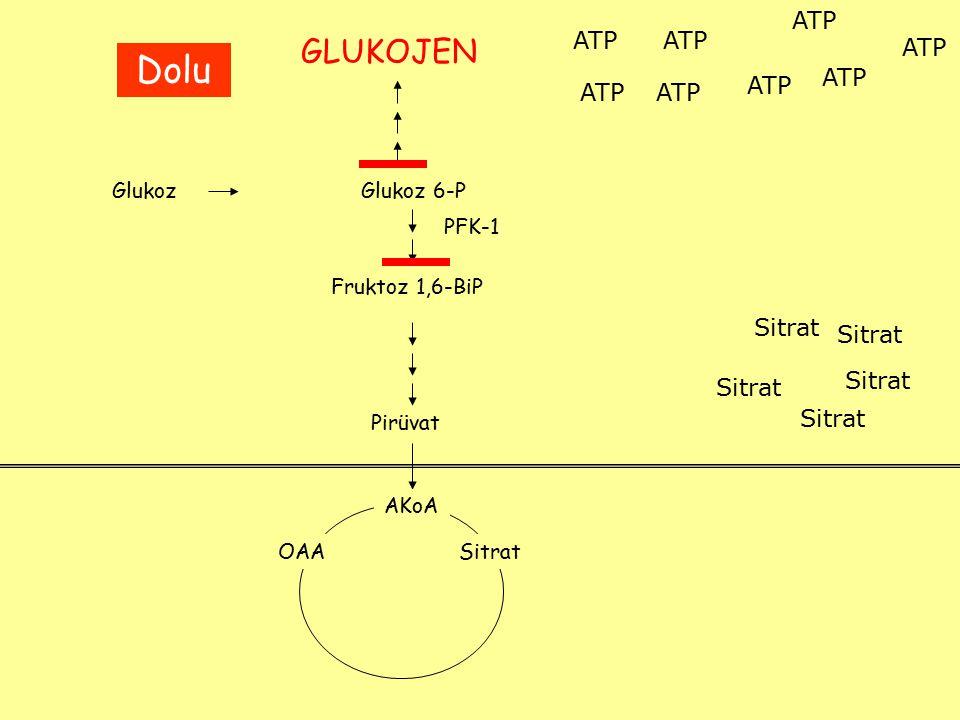 GlukozGlukoz 6-P Fruktoz 1,6-BiP PFK-1 Pirüvat AKoA OAASitrat ATP Sitrat GLUKOJEN Dolu HMY NADPH ATP