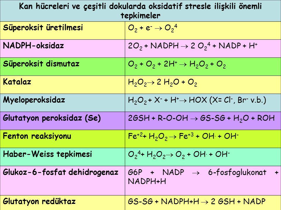 Kan hücreleri ve çeşitli dokularda oksidatif stresle ilişkili önemli tepkimeler Süperoksit üretilmesiO 2 + e -  O 2 4 NADPH-oksidaz2O 2 + NADPH  2 O