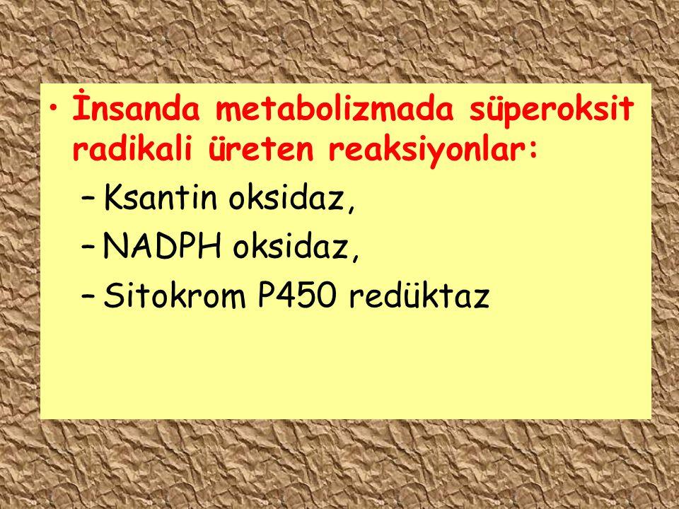 İnsanda metabolizmada süperoksit radikali üreten reaksiyonlar: –Ksantin oksidaz, –NADPH oksidaz, –Sitokrom P450 redüktaz