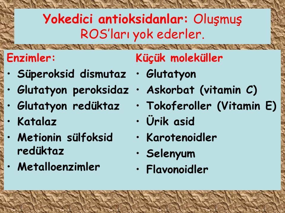 Yokedici antioksidanlar: Oluşmuş ROS'ları yok ederler. Enzimler: Süperoksid dismutaz Glutatyon peroksidaz Glutatyon redüktaz Katalaz Metionin sülfoksi