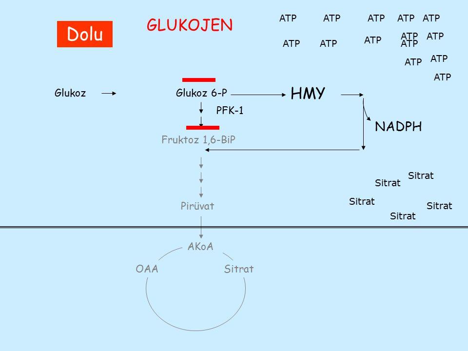 Kan hücreleri ve çeşitli dokularda oksidatif stresle ilişkili önemli tepkimeler Süperoksit üretilmesiO 2 + e -  O 2 4 NADPH-oksidaz2O 2 + NADPH  2 O 2 4 + NADP + H + Süperoksit dismutazO 2 + O 2 + 2H +  H 2 O 2 + O 2 KatalazH 2 O 2  2 H 2 O + O 2 MyeloperoksidazH 2 O 2 + X - + H +  HOX (X= Cl -, Br - v.b.) Glutatyon peroksidaz (Se)2GSH + R-O-OH  GS-SG + H 2 O + ROH Fenton reaksiyonuFe +2 + H 2 O 2  Fe +3 + OH.