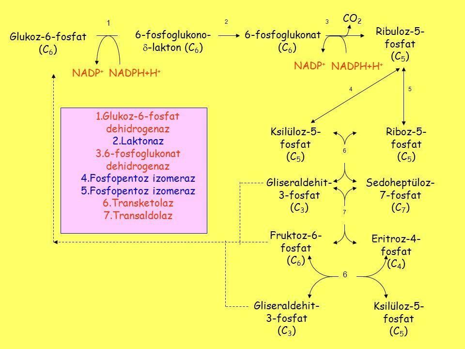 Riboz-5- fosfat (C 5 ) Ribuloz-5- fosfat (C 5 ) CO 2 32 1 54 Glukoz-6-fosfat (C 6 ) 6-fosfoglukono-  -lakton (C 6 ) 6-fosfoglukonat (C 6 ) NADP + NAD