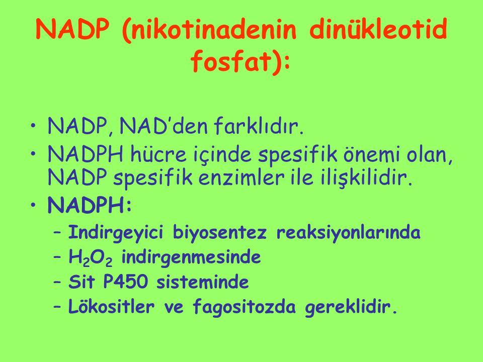 NADP (nikotinadenin dinükleotid fosfat): NADP, NAD'den farklıdır. NADPH hücre içinde spesifik önemi olan, NADP spesifik enzimler ile ilişkilidir. NADP