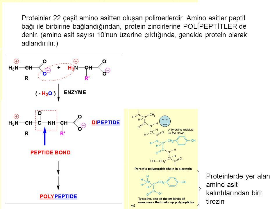Proteinler 22 çeşit amino asitten oluşan polimerlerdir. Amino asitler peptit bağı ile birbirine bağlandığından, protein zincirlerine POLİPEPTİTLER de