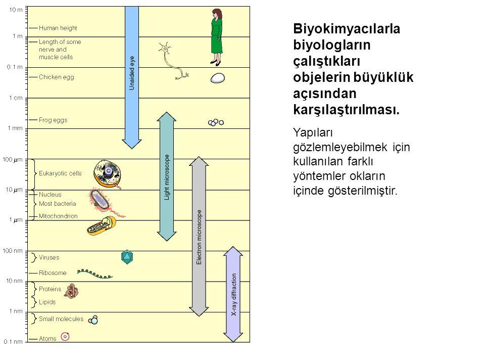 Biyokimyacılarla biyologların çalıştıkları objelerin büyüklük açısından karşılaştırılması. Yapıları gözlemleyebilmek için kullanılan farklı yöntemler