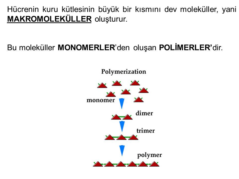 Hücrenin kuru kütlesinin büyük bir kısmını dev moleküller, yani MAKROMOLEKÜLLER oluşturur. Bu moleküller MONOMERLER'den oluşan POLİMERLER'dir.