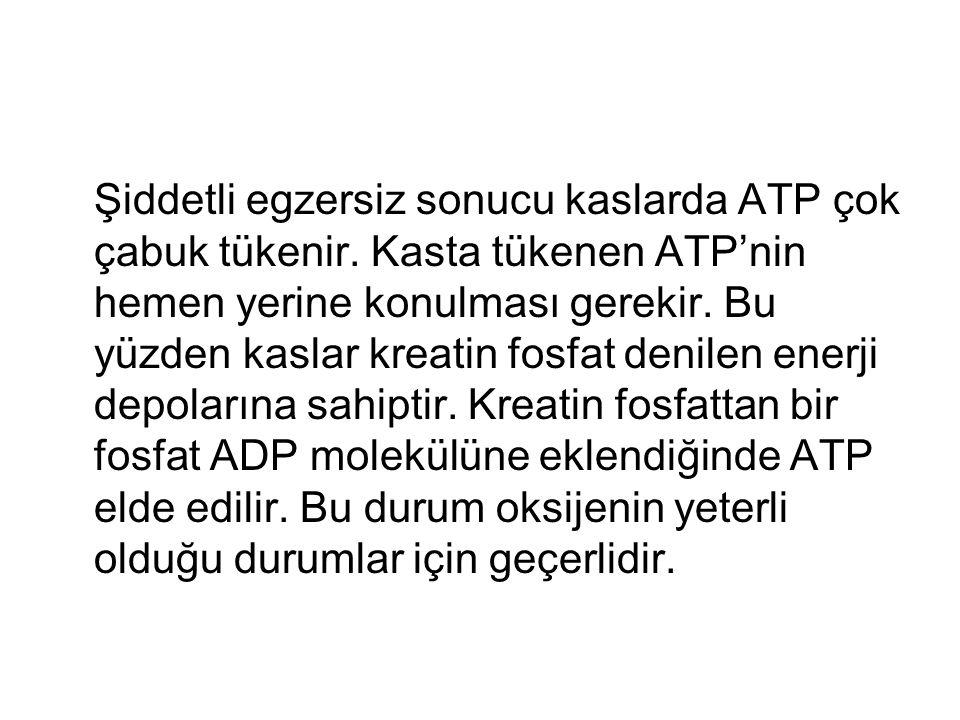Şiddetli egzersiz sonucu kaslarda ATP çok çabuk tükenir. Kasta tükenen ATP'nin hemen yerine konulması gerekir. Bu yüzden kaslar kreatin fosfat denilen