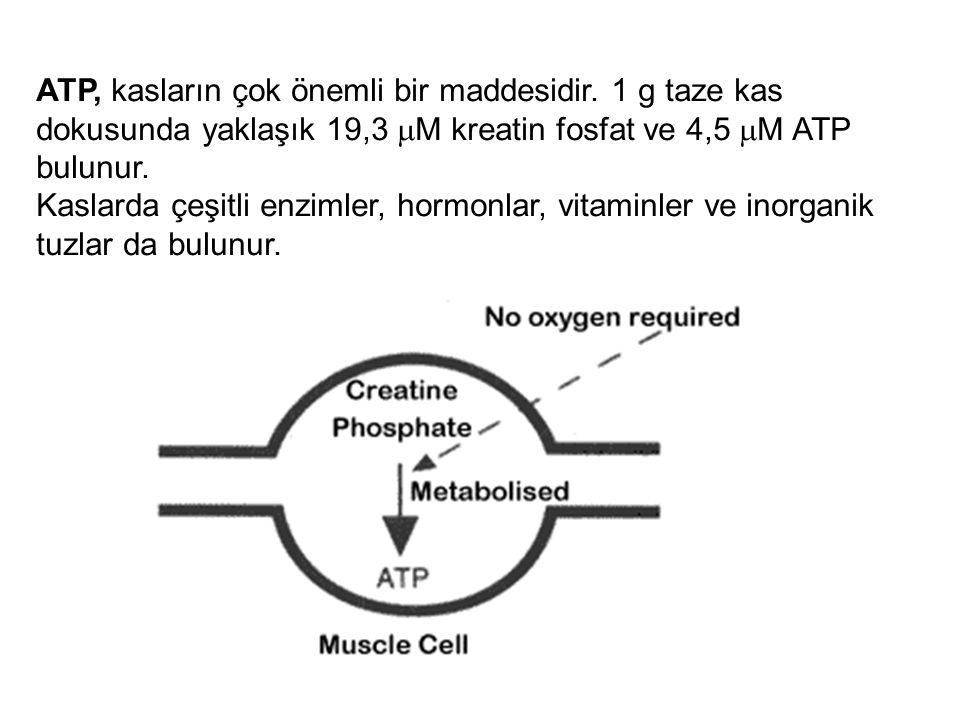 KAS KASILMA-GEVŞEMESİ İÇİN ENERJİ KAYNAKLARI Kas kasılıp gevşemesi için kullanılan enerji ATP'dir.