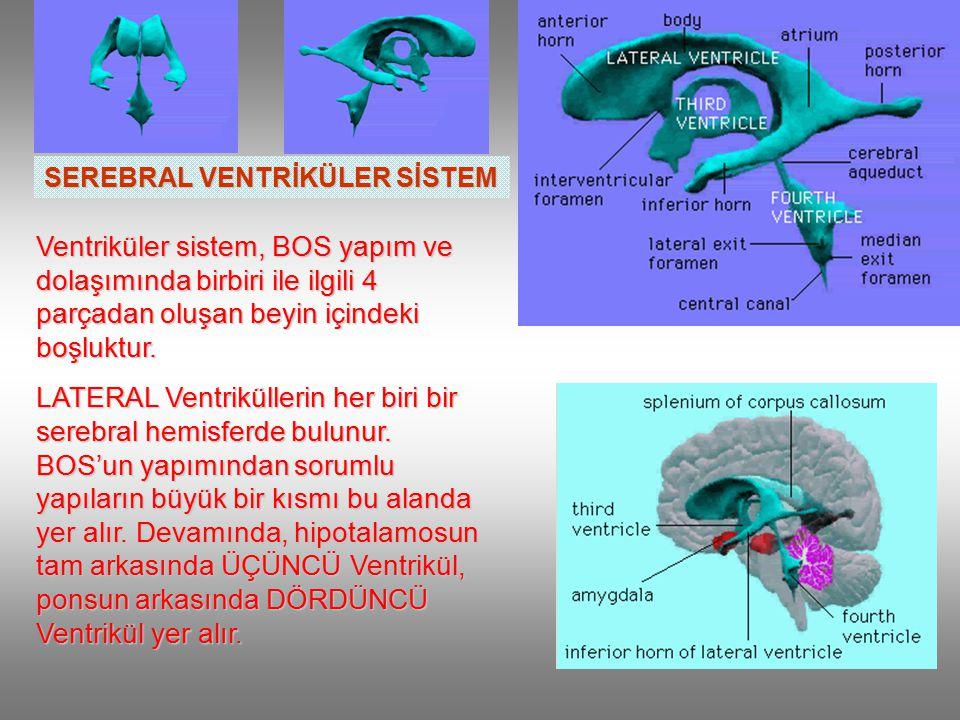 SEREBRAL VENTRİKÜLER SİSTEM Ventriküler sistem, BOS yapım ve dolaşımında birbiri ile ilgili 4 parçadan oluşan beyin içindeki boşluktur.