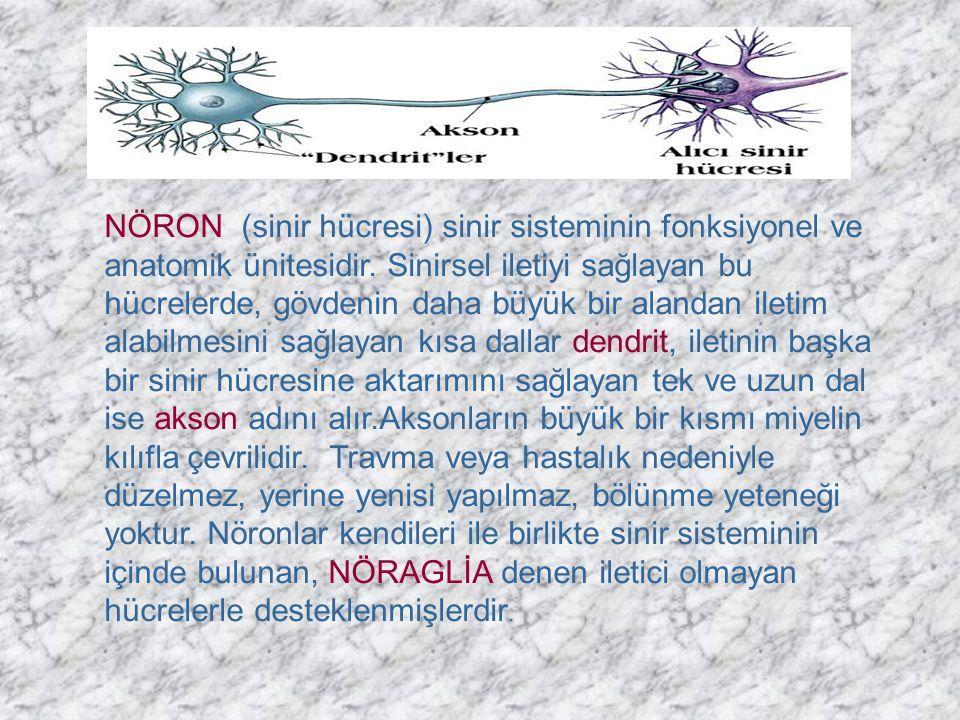 NÖRON (sinir hücresi) sinir sisteminin fonksiyonel ve anatomik ünitesidir.